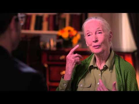 Last Week Tonight with John Oliver: Dr. Jane Goodall Interview (HBO)