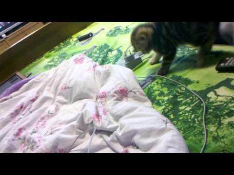 Котенок бесится