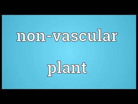 Header of Non-vascular plant