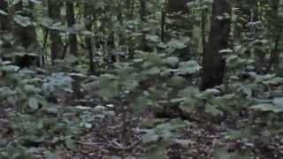 2013 Bigfoot Footage