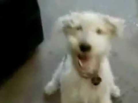 Собака рокера » waboo.ru
