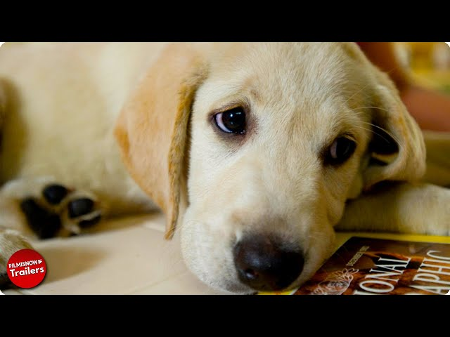 'Man's Best Friend' The Ultimate Dog Movie Mashup (2015) HD