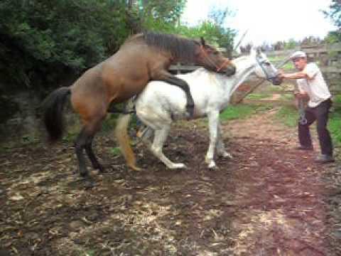 Cobrindo minha égua !!!