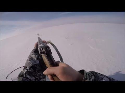 охота на волков в Казахстане 2017 ( hunting for wolves )