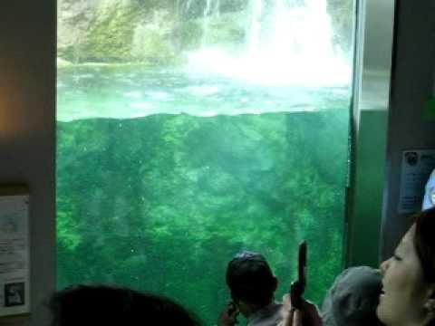 20070705旭山動物園