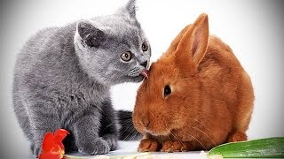 Cats and Rabbits Playing Together [Funny Pets]