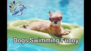 Dog Swimming in Water | Funny Dog Videos | Funny Pets