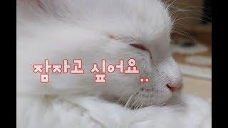 잠이많은아이VS잠이너무없는아이 귀여운고양이동영상