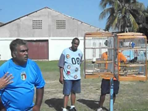 Trini Bullfinch ... Nigel Vs Imtiaz .... Don Miguel .........watch Thiefing video