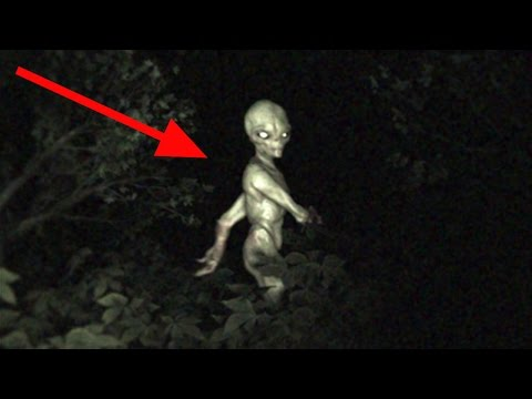 UFO Crash In Forest | Alien Discovery | Project Blue Book