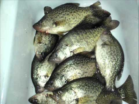 Big bluegill video and fishing photos for Ice fishing indiana