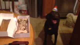Happy Birthday Dakota The Dog