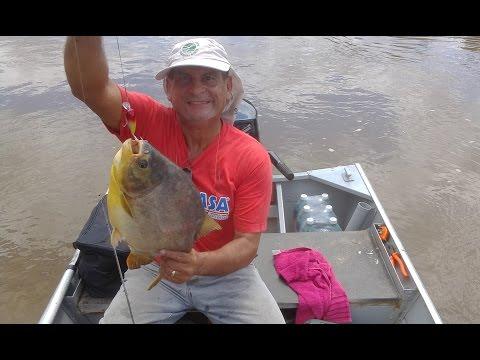 Pescaria De Pacu Na Batida - Pantanal - Barão De Melgaço - MT