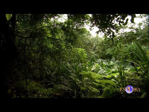 La Conservación de los Ecosistemas | Explora Films EN