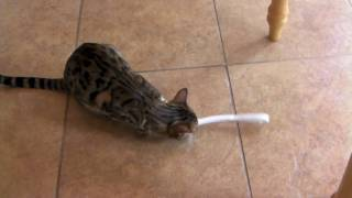Giant Kitty Toothbrush