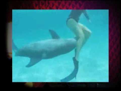 Секс с дельфином порно видео