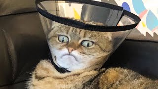 🤣 Funniest 😻Cats And 🐶 Dogs - Try Not To Laugh - Best Of The Funny Animal Videos