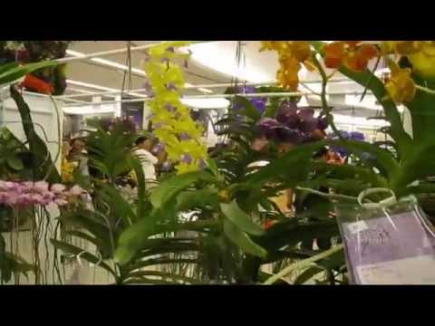 Orchid 2011 @ Siam Paragon – กล้วยไม้ (2)