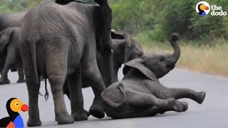Baby Elephant Decides To Nap In The Middle Of The Road | The Dodo