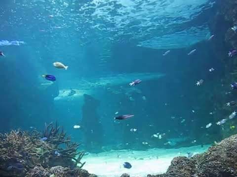 acuario de Sydney