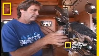 High-Velocity Falcon | National Geographic