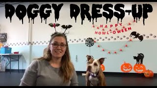 Dressing Up Your Dog- Training Tip Tuesday