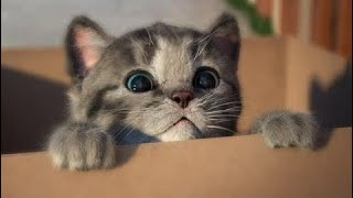 Kid's Games: My Favorite Cat Little Kitten Pet Care - Baby Play Original and Lovely Kitten Kids Gam