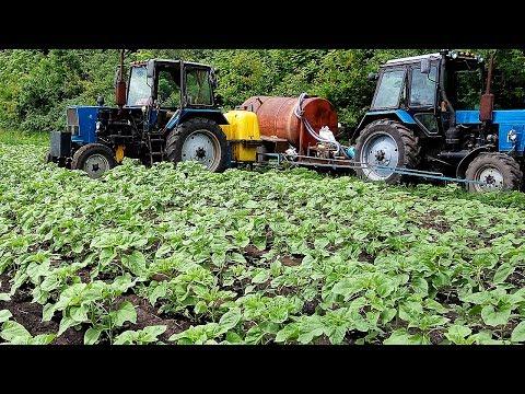 Бор на подсолнух +регулятор роста + карбамид + инсектицид