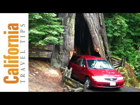 California Redwoods - Avenue of the Giants
