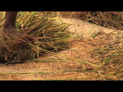 Sumba Island Trailer