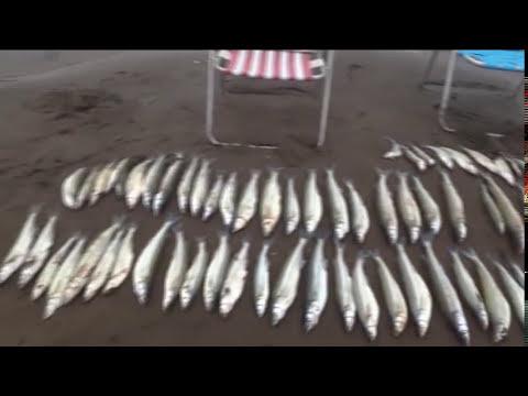 pesca en chasico por sergio vespa