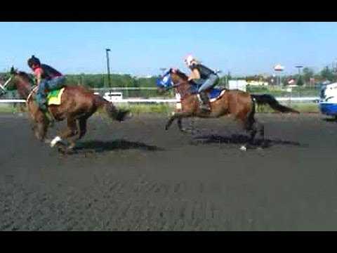 Thoroughbred Race Training. Top Female/Girl jockey riding horse.