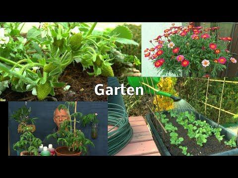 Gemüse im Hochbeet Aussaat Salat und Zucchini draußen Tomaten im Haus umtopfen