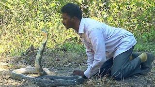 Vava Suresh Kissing a KING COBRA !! | Vava Suresh Snake Master 18-03-2016 | Kaumudy TV