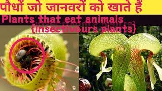 पौधों जो जानवरों को खाते हैं   Plants that eat  to animals (Insectivours plants) Akif wani