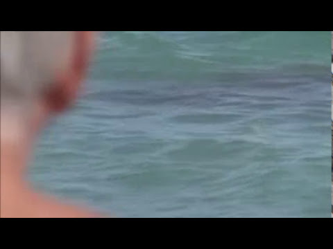 FLORIDA SHARK ATTACKS IN BROAD DAYLIGHT 5 FEET FROM SHORE FLORIDA BEACH