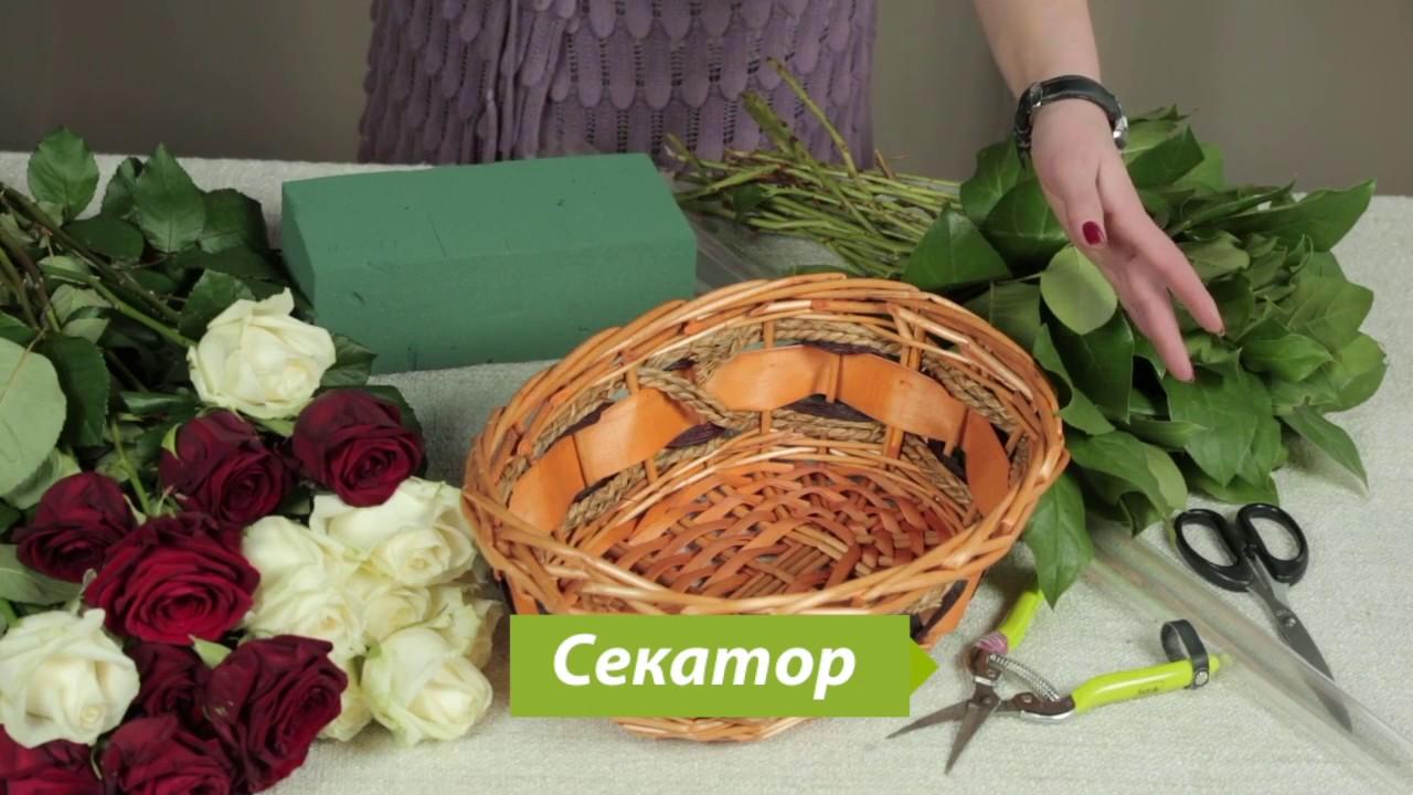 Каталог луковичных цветов с комнатные