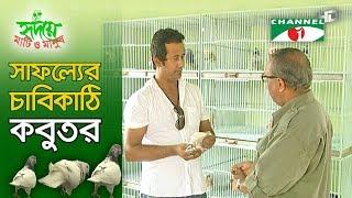 Pigeon farming in Bangladesh