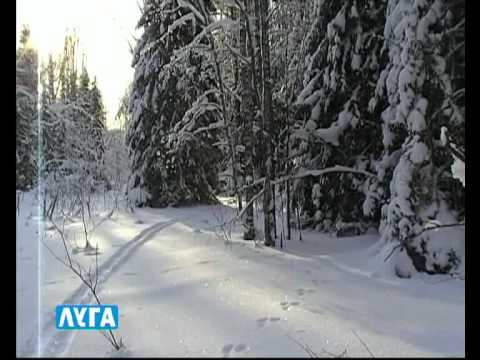 Лыжные гонки по лесам Поназырево