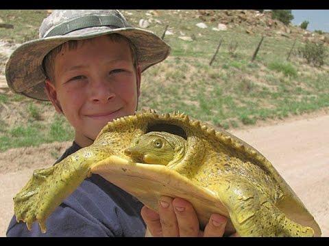 Catching Softshell Turtles!