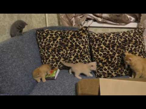 Позитивные котята/Кошка Ласка и её детки)))
