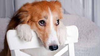 අපිත් හරිම හැඟුම්බරයි හරිද..Best Of Funny Guilty Dog Compilation 2014