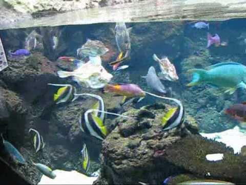 Fische videolike for Teichreinigung mit fischen