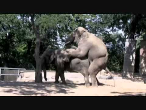 O Sexo dos Elefantes