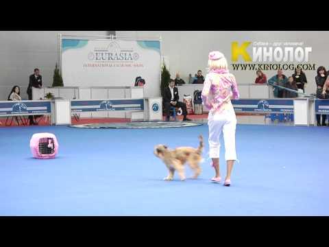 11 Dog Show Eurasia  2012 / Russia / Moscow. Freestyle.