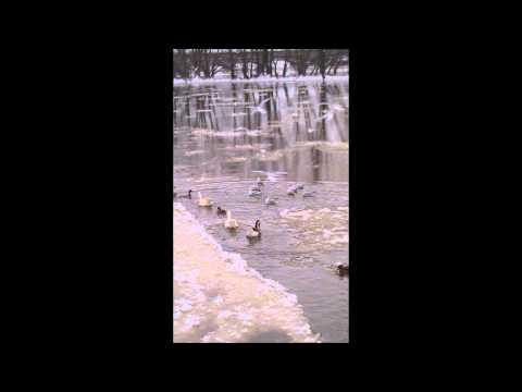 Iris Loveridge - Arnold Bax : Water Music