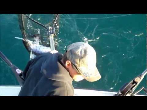 Catching Big Fish. Sheboygan Wisconsin Salmon Fishing October 9, 2011