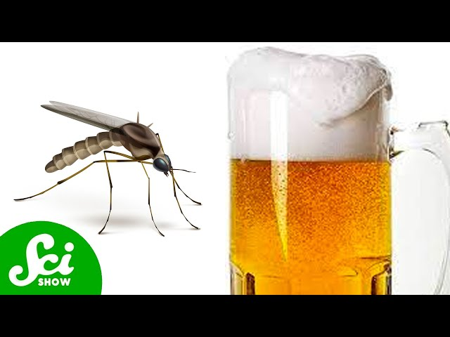 5 Things That Make You a Mosquito Magnet thumbnail