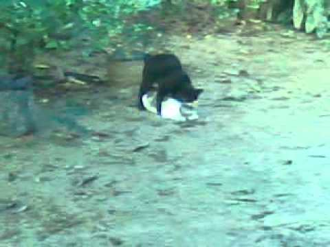 Seks Kucing.3gp video