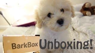 Barkbox Unboxing Feb 2014